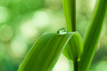 Wasser - Ayurveda